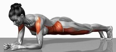 muscle_planche-abdominale
